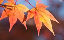 2017年秋天开始的第一天是几号 2017年秋天什么时候来