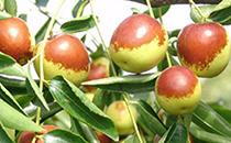 冬枣变红可以吃吗 冬枣为什么用开水泡过会变红