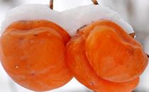 冻柿子和酸奶能一起吃吗 冻柿子和酸奶一起吃会怎么样
